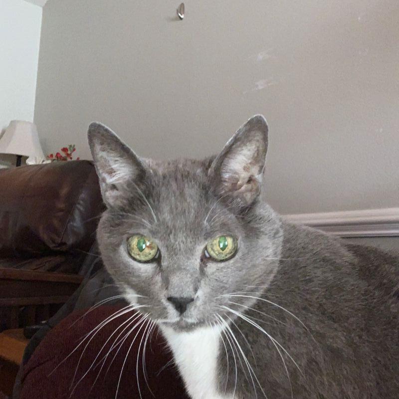 Michael's Cat Oliver
