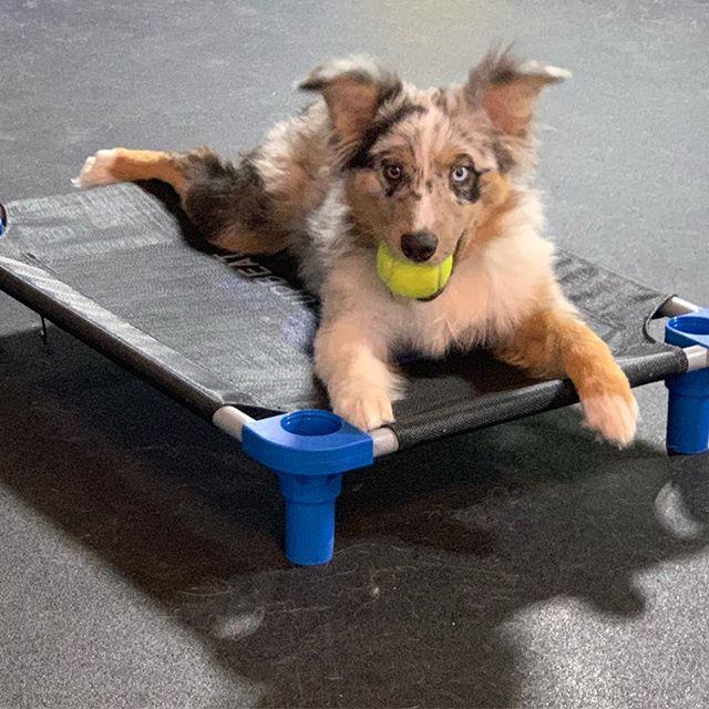 doggie-training